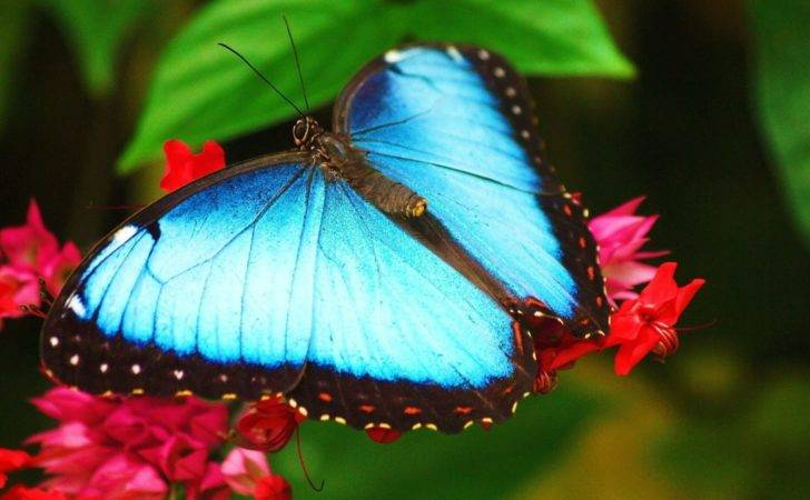 All Butterfly