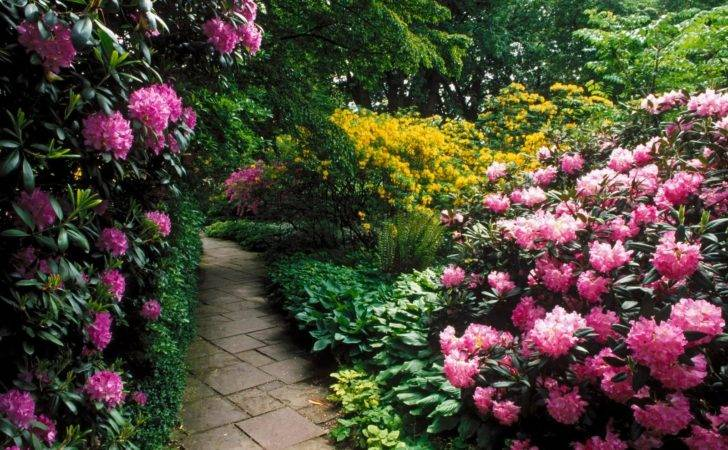 Beautiful Flower Garden Forest Cool