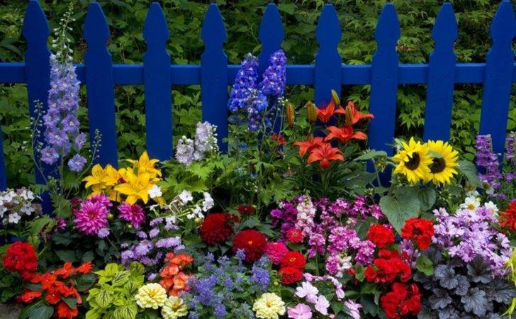 Beautiful Flower Garden Photos