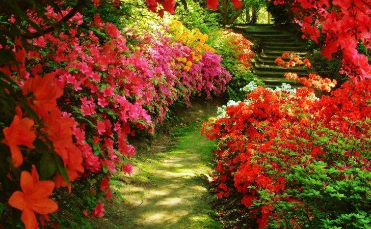 Beautiful Garden Azalea Beutiful Flowers