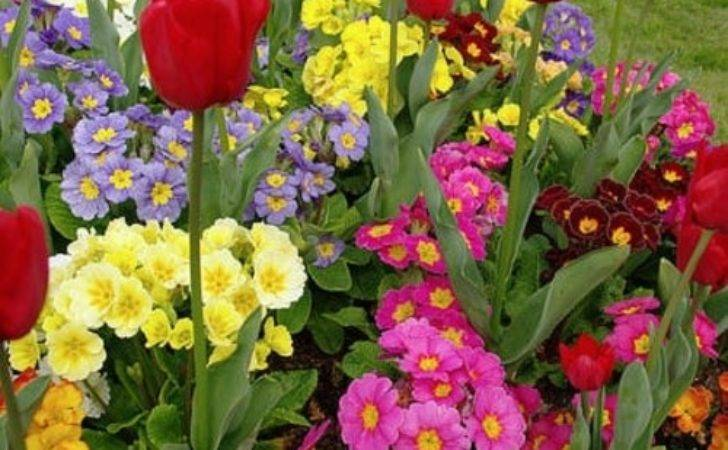 Beautiful Spring Flower Gardens