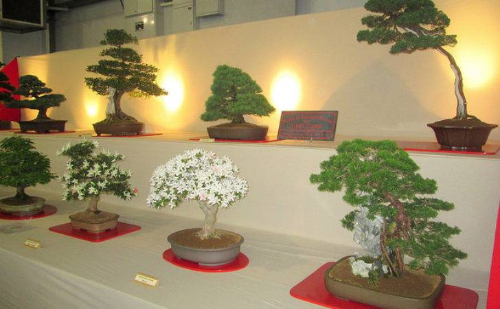 Bonsai Gardening Scotland Pining West