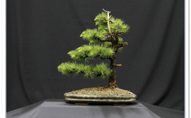Bonsai News Events Sba
