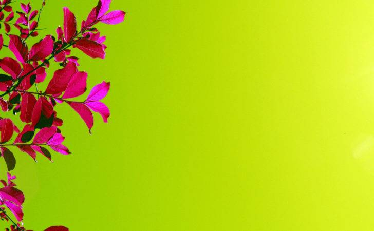 Bright Pink Flowers Green Powerpoint