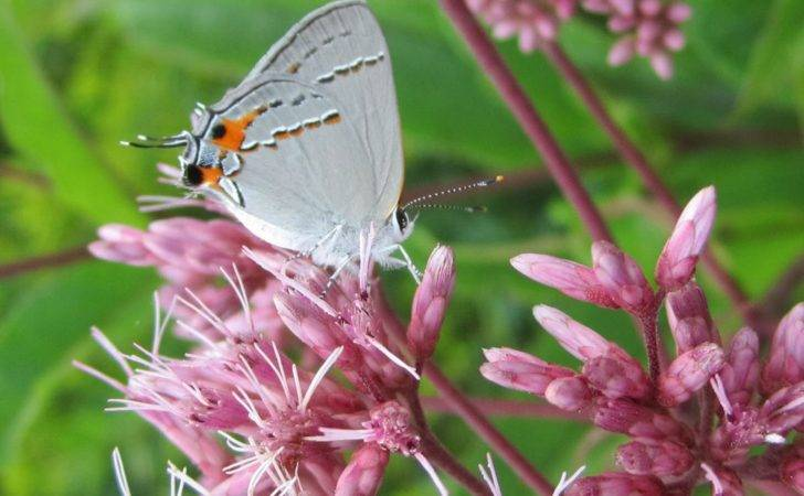 Butterfly Funny Photos Mages