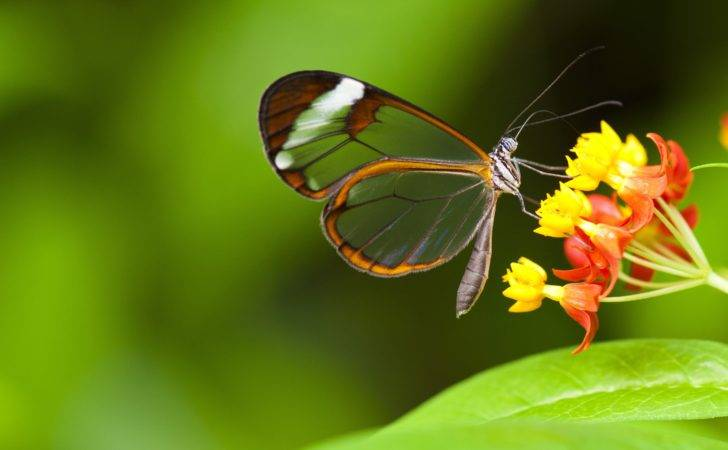 Butterfly Insects Flowers