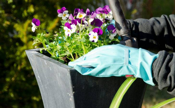 Canva Photos Planting Pansies Russell Feed Supply