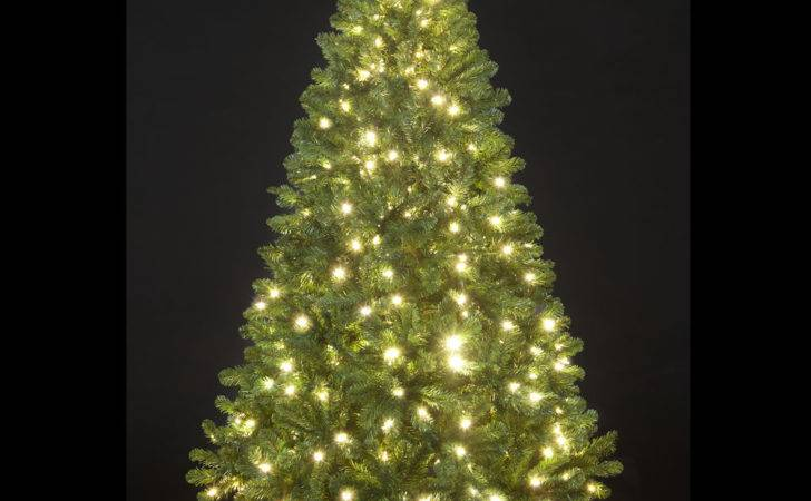 Christmas Trees Connecticut Best Template Collection