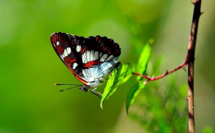 Colors Nature Butterfly