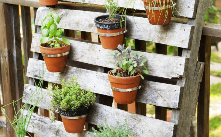 Container Gardening Ideas Potted Plant Love