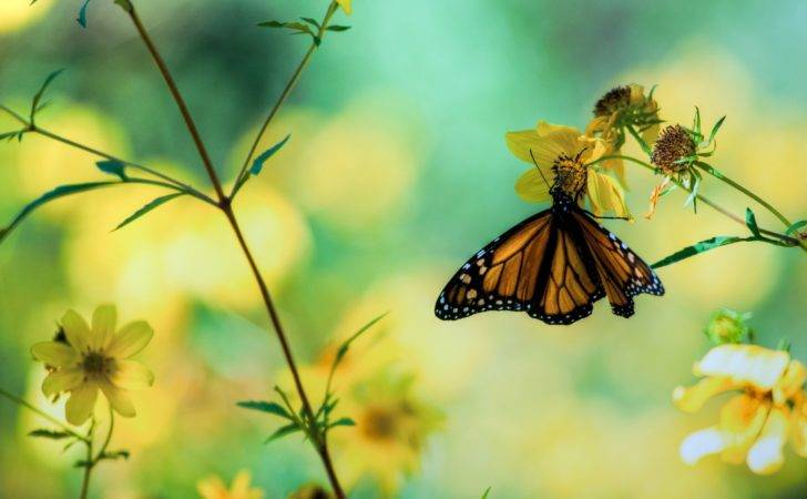 Daily Butterfly Garden Like Waste Time