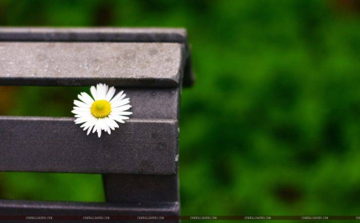 Daisy Flower Bench