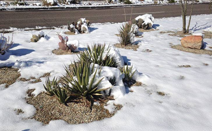 December Gardening Tips Las Cruces Find Out
