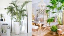 Decorate Tropical Style Real Origin
