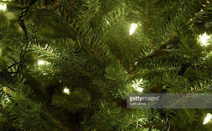 Fairy Lights Christmas Tree Closeup Getty