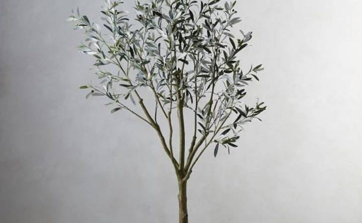 Faux Potted Olive Tree Pottery Barn