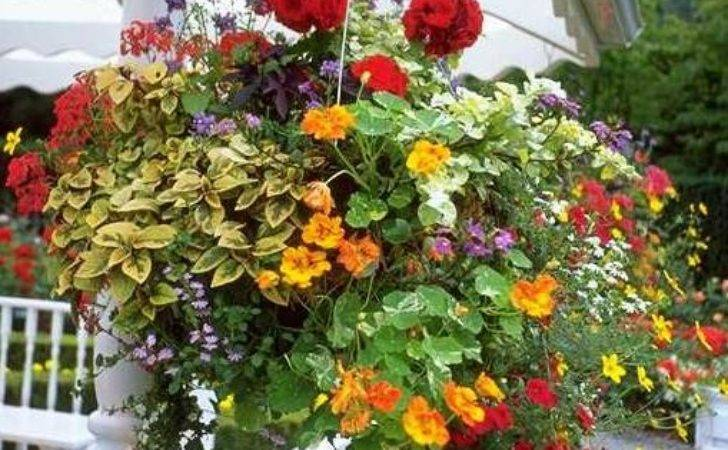 Favorites Annuals Hanging Baskets