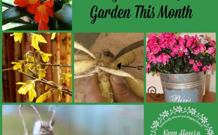 February Gardening Tips Things Garden New