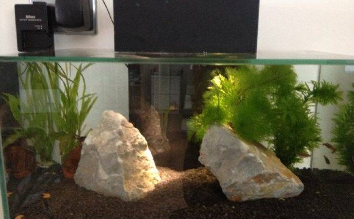 Fishkeeping New Forum Looking Some Advice