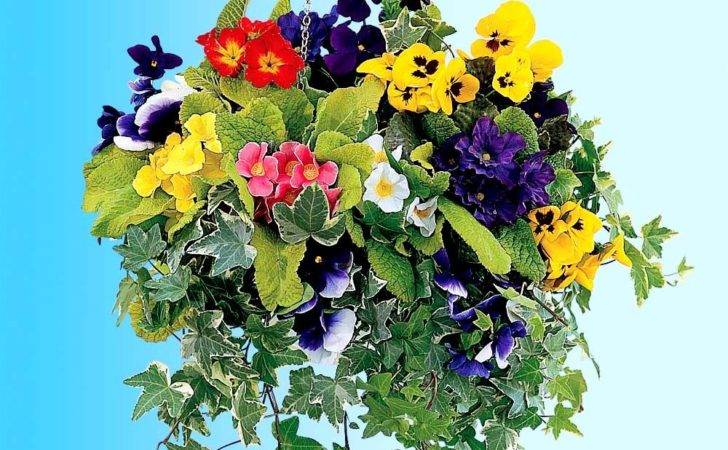 Flower Hanging Baskets Maintaining Tips Build