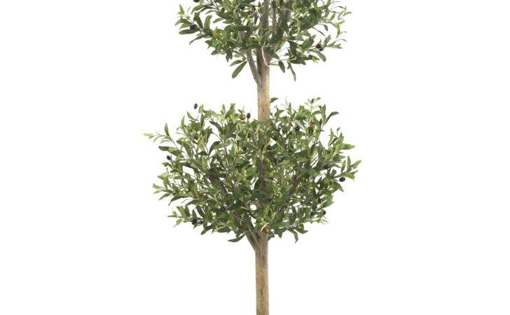 Foot Olive Double Ball Topiary Tree Potted