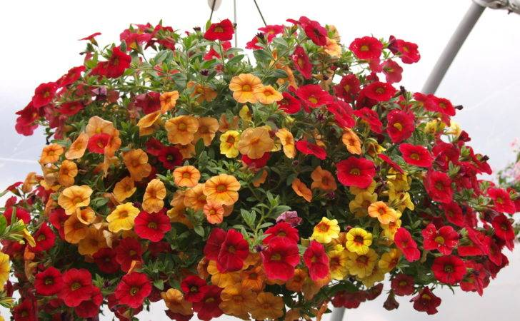 Gifts Mom Mother Day Knecht Nurseries