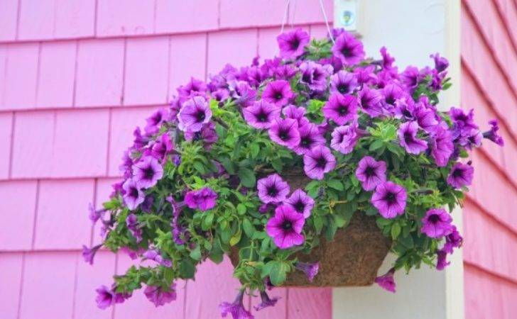 Hanging Baskets Masterpiece Flower Company Commercial
