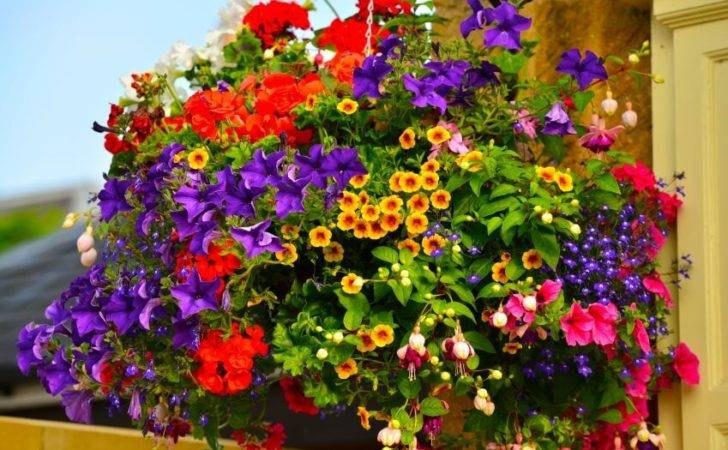 Hanging Flower Planter Ideas Photos Top Home