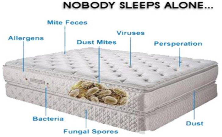 Importance Keeping Your Mattress Clean