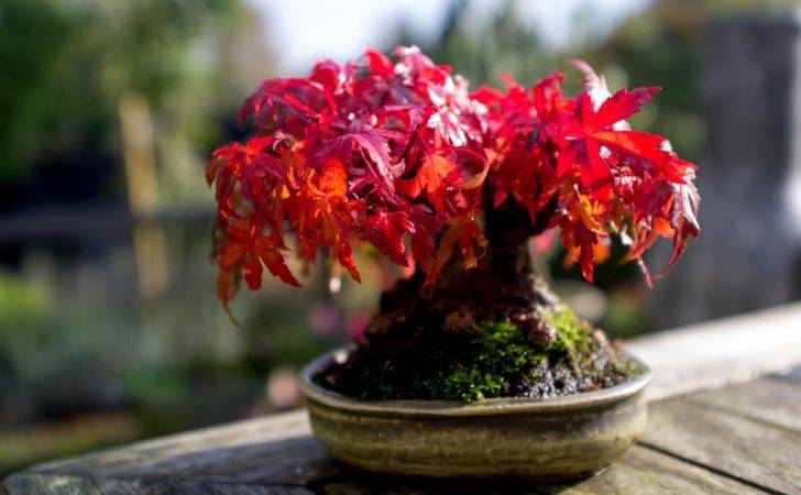 October Shohin Bonsai Blog