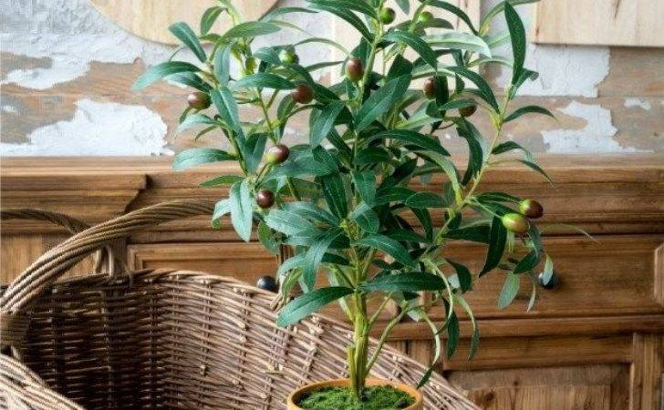 Olive Tree Potted Clay Pot Antique Farmhouse