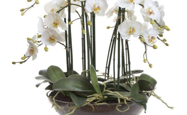 Phal Orchid Glass Vase White Emac Lawton