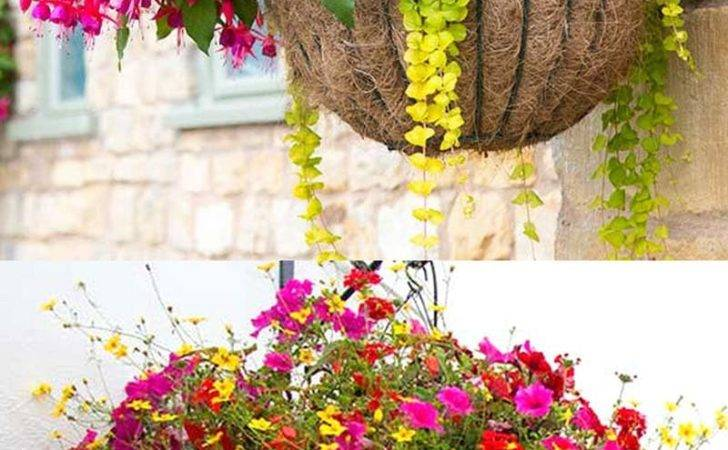 Plant Beautiful Flower Hanging Baskets Best