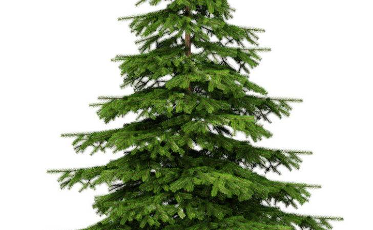 Real Christmas Trees Camberley Emments