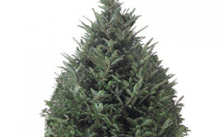 Real Christmas Trees Types