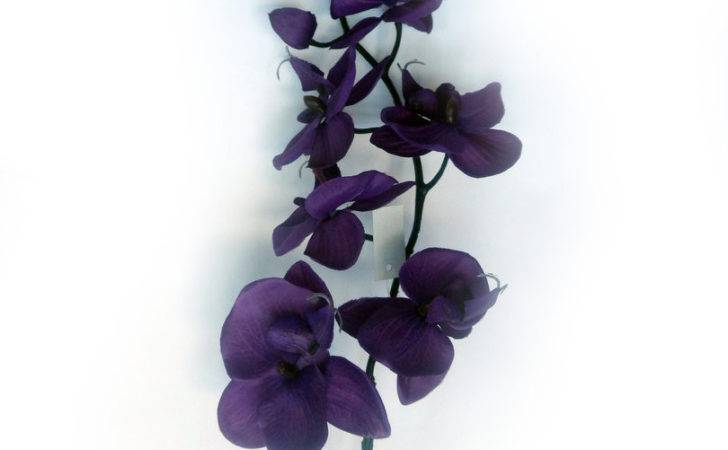 Realistic Moth Orchid Silk Flower Stem Many Colours