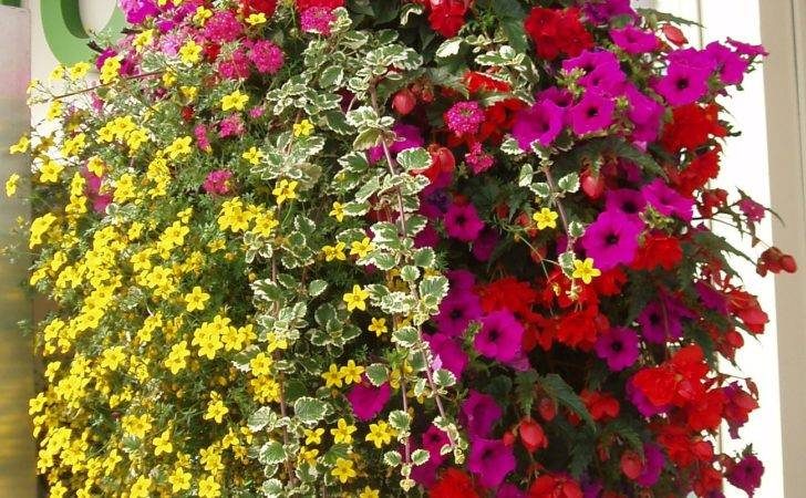 Replanting Hanging Baskets Choice Plants