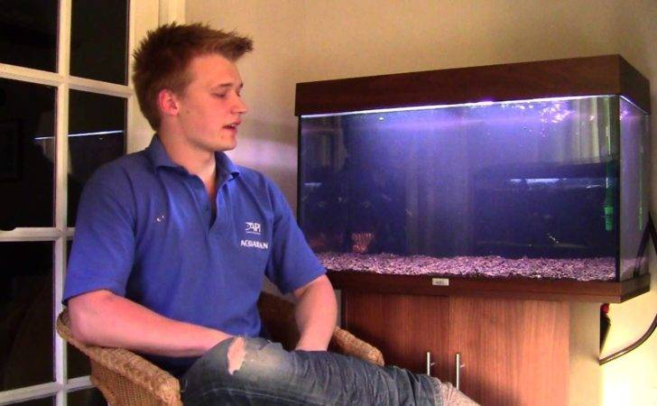 Set Tropical Fish Tank Youtube