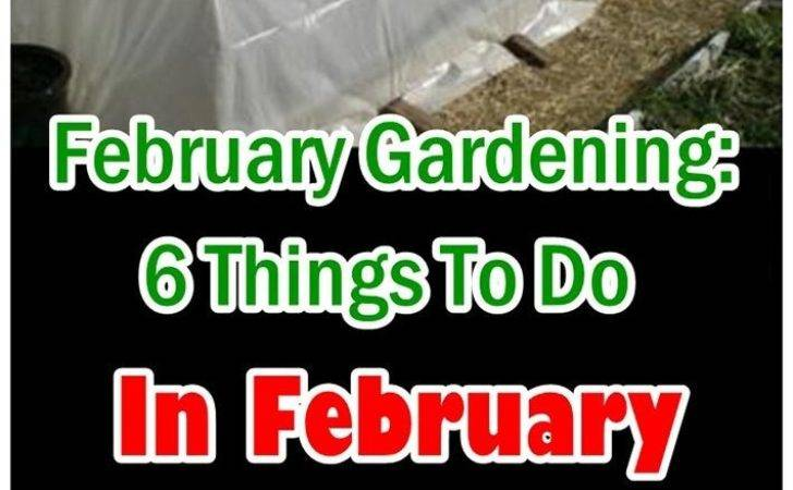 Sweet Macaw February Gardening Things