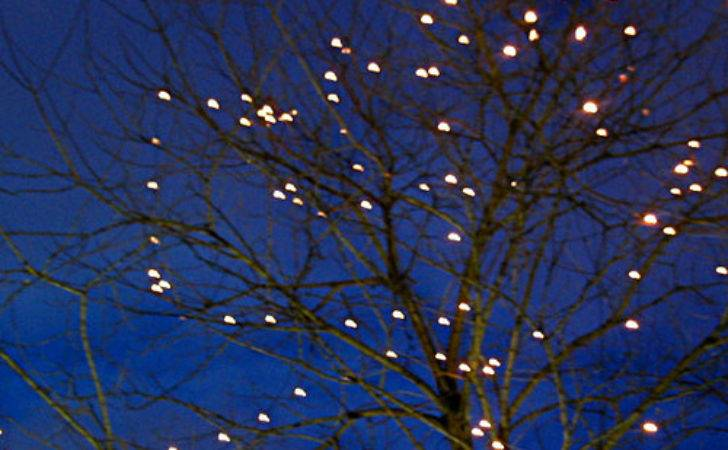 Tree Fairy Lights Rno Explore Blech Photos