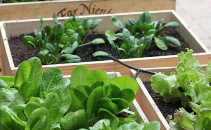 Useful Ideas Small Space Gardens