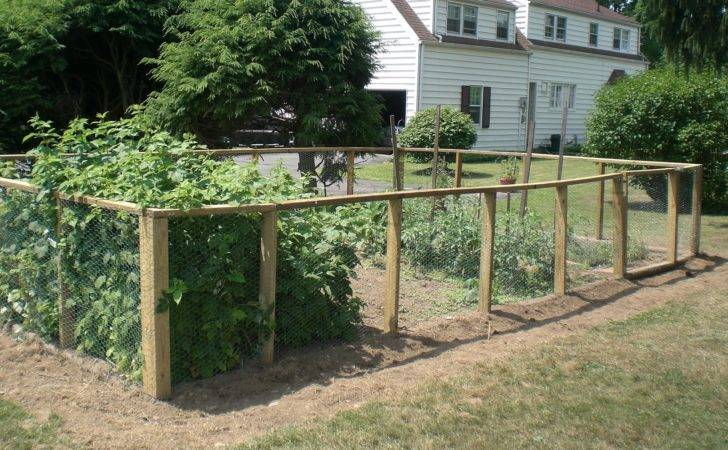 Vegetable Garden Fence Ideas Photograph