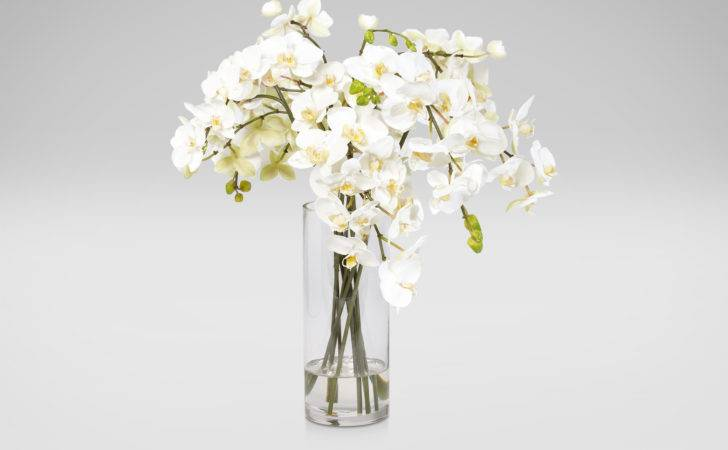 White Orchids Glass Vase Florals Trees