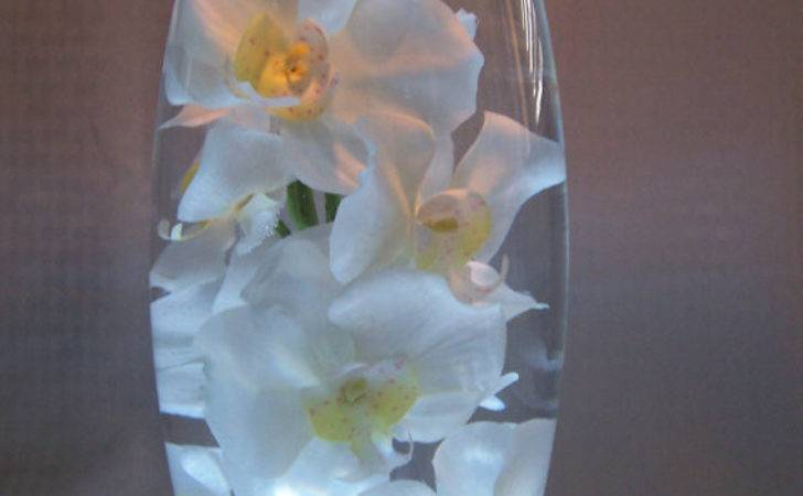 White Orchids Water All Inch Vase Which Sits
