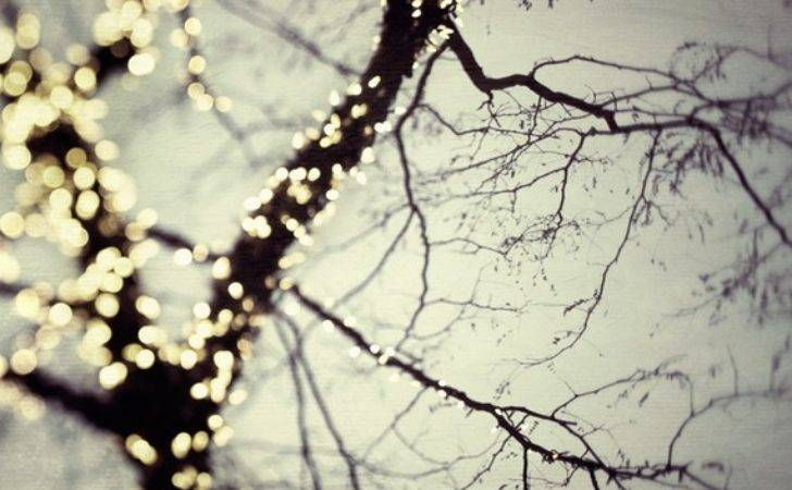 Winter Tree Bare Branches Fairy Lights Christmas Decor